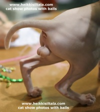 kuva 049380 . www.heikkisiltala.com - cat show photos with balls . 7.10.2006