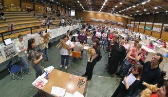 kuva 050056 . Unikuun Baileys Dream [MCO d 22] (vasemmalla) & Maikkilan Vilhelmi [MCO d 22] (keskellä) & CalmatoCat Domingo [MCO d 22] (oikealla) . 8.10.2006