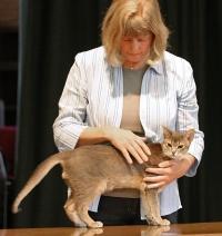 photo 051197 . Bastian's Auryn Atreyu [ABY a] . 2006-10-15