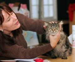 photo 053043 . CH Godfather's Annie Oakley (Tirri) [MCO n 22] . 2006-11-19