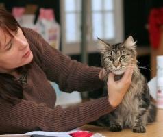 photo 053044 . CH Godfather's Annie Oakley (Tirri) [MCO n 22] . 2006-11-19
