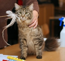 photo 053050 . Mibella's Amazing Lady  [MCO n 23] . 2006-11-19