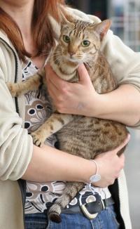 photo 061188 . Topspot Miss Primrose (Rosa) [OCI b 24] . 2007-03-10