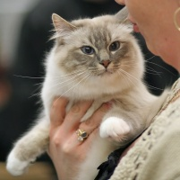 photo 062218 . Snow-Birman Be Able To Hug (Nemo) [SBI a 21] . 2007-03-24