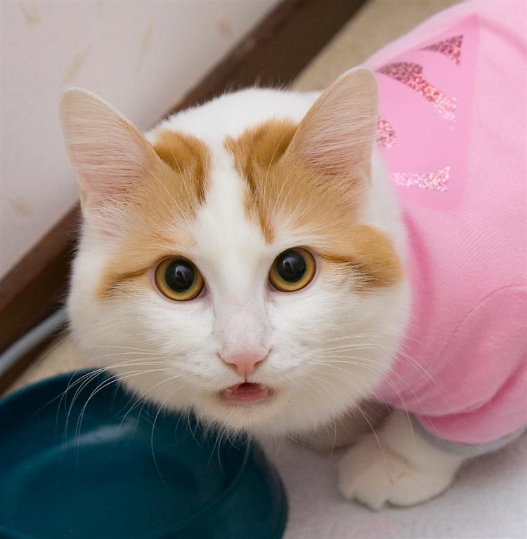bonus photo The eating habits of felis domesticus: IC Cesmes Adile Aysun (Mimosa) [TUV d 62], photo 063125, 2007-04-21