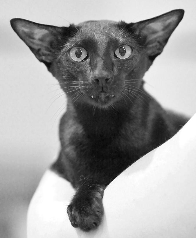 EP,EC Desmodus Black Ferrari (Pete) [OSH n], photo 068023, 2007-06-30