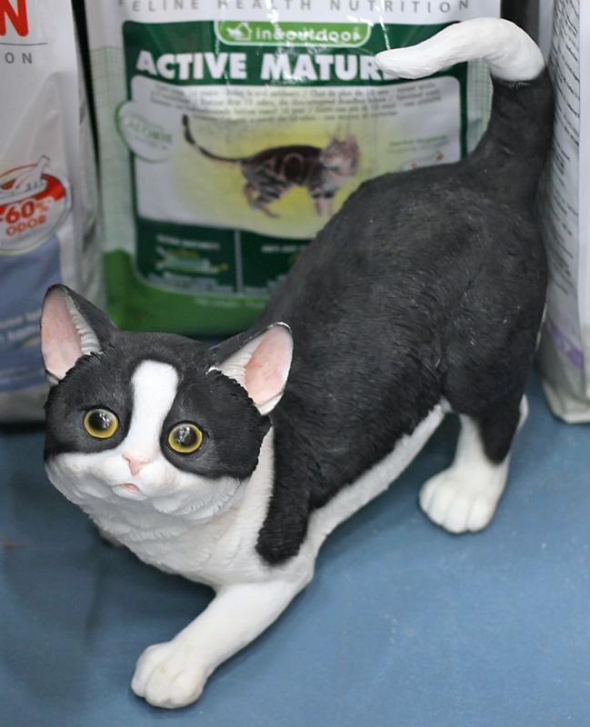 Musti ja Mirri Ylivieskan kissa, kuva 069154, 7.7.2007