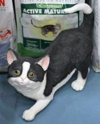 photo 069154 . The cat of Musti ja Mirri Ylivieska . 2007-07-07
