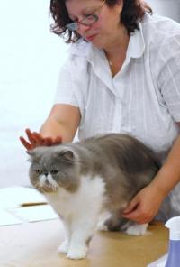 photo 071124 . GIC Honeydew Charming King [PER a 03] . 2007-07-28