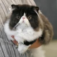 photo 072018 . Precious Panda Bear (Panda) [PER n 03] . 2007-07-29