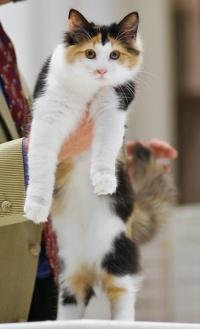 kuva 077029 . FluffyTail's Lovely Lulu [NFO f 09] . 22.9.2007