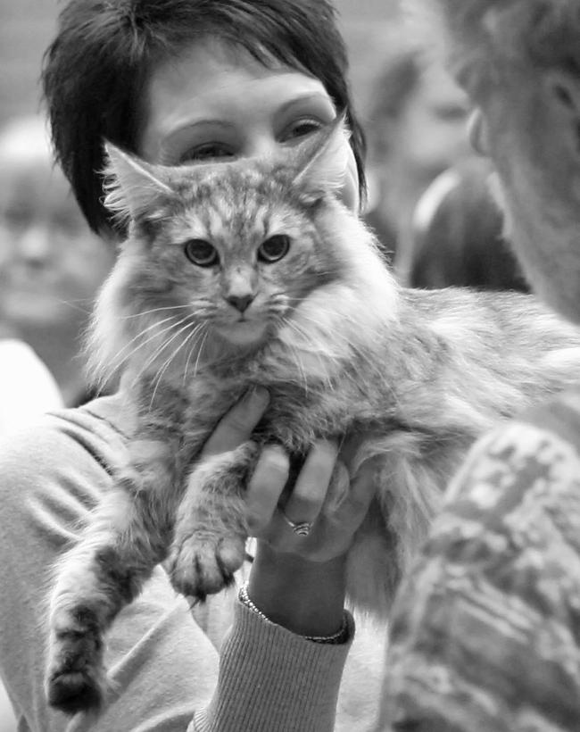 GIC Kalabalik Bellona Silfvermö [NFO fs 23], photo 078117, 2007-09-29