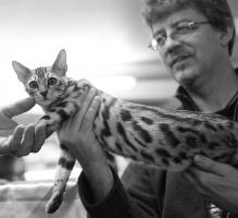 kuva 080062 . Leopardette's Wild PolarPuma [BEN x ns 24] . 10.11.2007