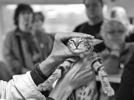 photo 080144 . NO*Kimburu Sungura Sana of Moosegrove (Zani) [SOK n 22] . 2007-11-10