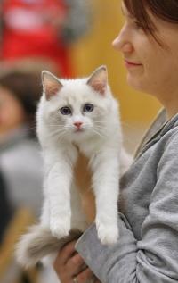 photo 081174 . Cat's-JM Piuti-Pink [RAG g 03] . 2007-11-24