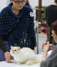 kuva 082172 . Fotocatin Catty Cleopatra [SBI d 21] . 25.11.2007