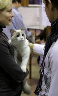photo 083063 . Cat's-JM Pikku-Hukka [RAG a 03] . 2008-01-19