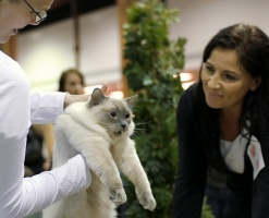 photo 083148 . Cat's-JM Tähti-Tassu [RAG a] . 2008-01-19