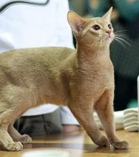 photo 085106 . Kawaii Daisuke (Jassu) [ABY p] . 2008-03-01