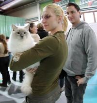 kuva 086230 . Cat's-JM Prince-Romeo (Piipe) [RAG a] . 2.3.2008