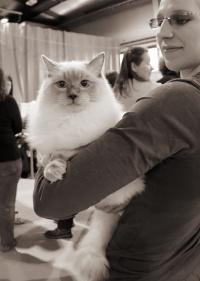 kuva 086232 . Cat's-JM Prince-Romeo (Piipe) [RAG a] . 2.3.2008