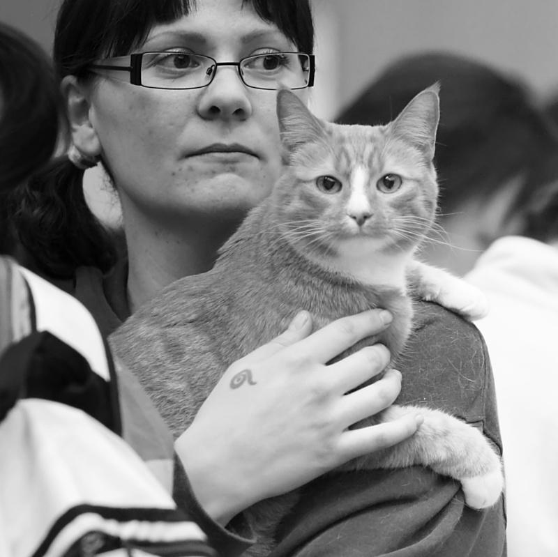 Rontti [HCS] female, photo 087361, 2008-03-22