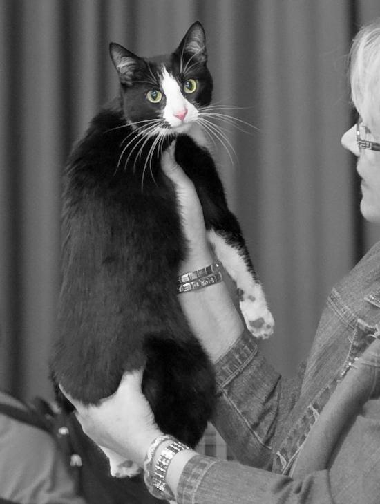 Henrietta Heinähattu [HCS] naaras, kuva 089025, 6.4.2008