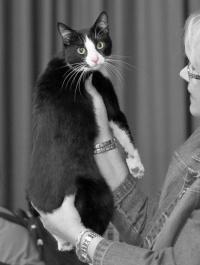 photo 089025 . Henrietta Heinähattu [HCS] female . 2008-04-06