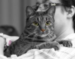 photo 089276 . Fasu [HCS] male . 2008-04-06