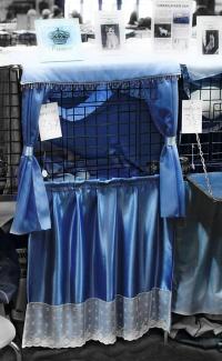 kuva 092121 . Ilveslinnan Amir Akanyildiz (Miro) [TUV d 62] vaaleansiniset häkkiverhot . 27.4.2008