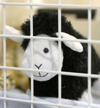 kuva 093178 . lammas (susi vielä puuttuu) . 3.5.2008