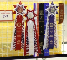 photo 094165 . ribbons and rosettes . 2008-05-04