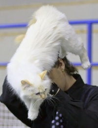 photo 095272 . GIC Fotocatin Catty Cleopatra (Peppi) [SBI d 21] . 2008-05-18