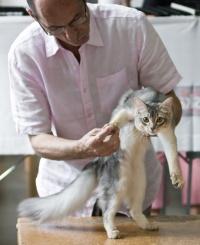 photo 099001 . Kattifnatts Oliver Walimai [SOM as] . 2008-08-02
