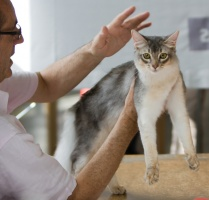 photo 099002 . Kattifnatts Oliver Walimai [SOM as] . 2008-08-02