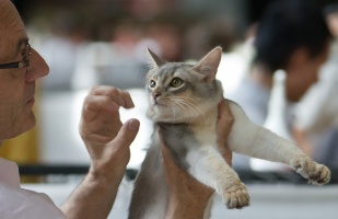 photo 099003 . Kattifnatts Oliver Walimai [SOM as] . 2008-08-02