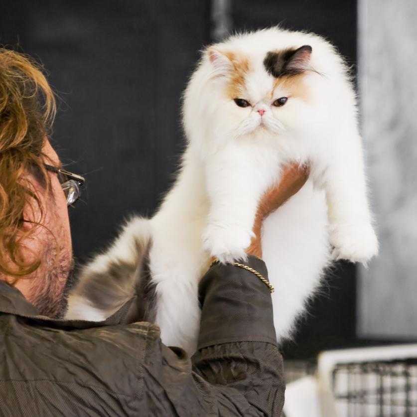 Kissankäpälän Angelina [PER fs 02], kuva 100005, 3.8.2008