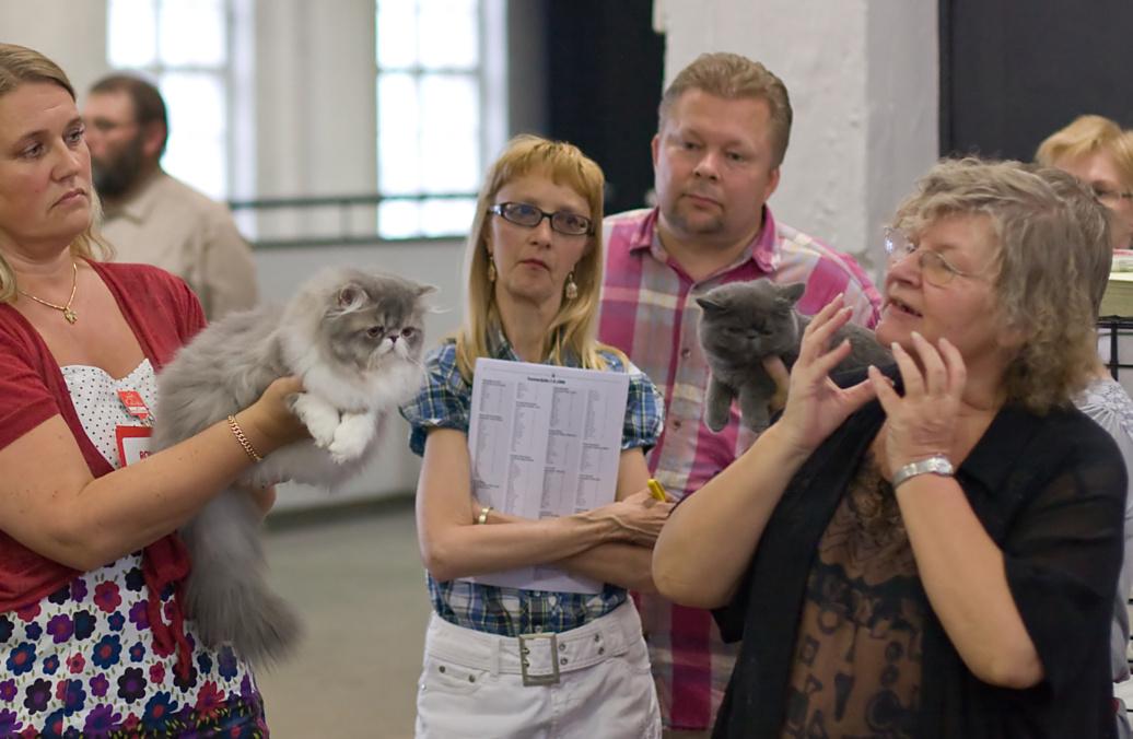 Kissankäpälän Blossom (Nuppu) [PER a 03 22], kuva 100191, 3.8.2008