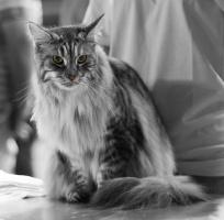 photo 101060 . CH Hemingway's Lady Laudine (Linda) [MCO fs 23] . 2008-08-23