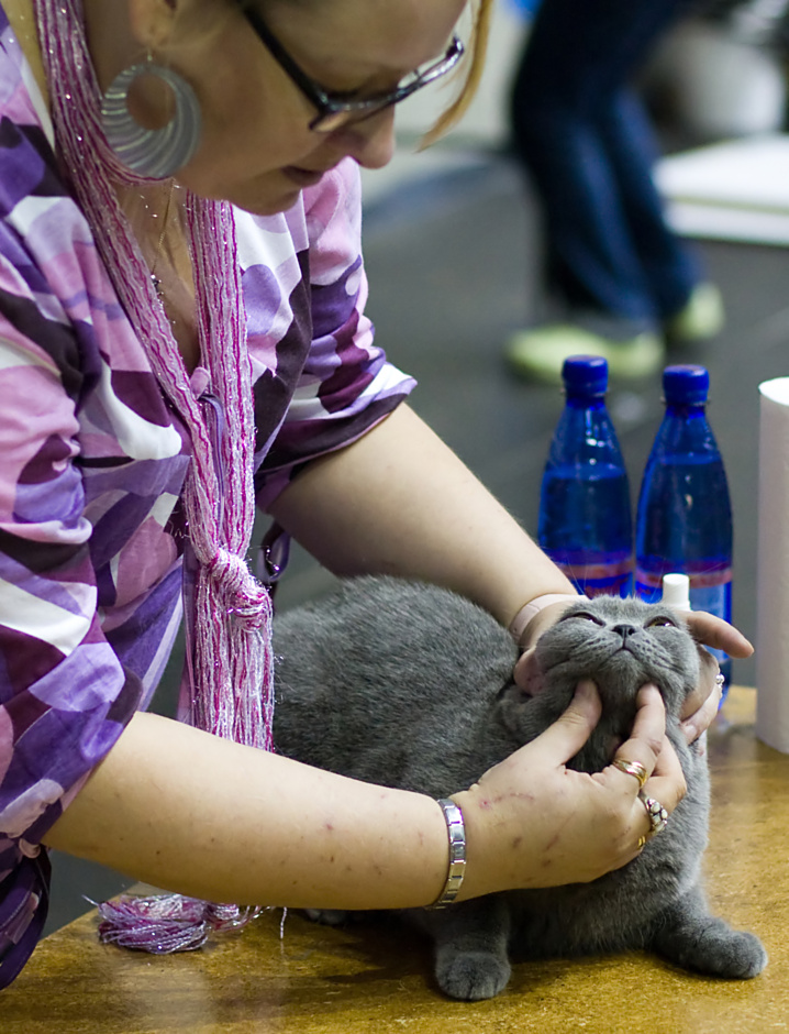 IC Ellinora Magic Smile [BRI a], photo 101037, 2008-08-23