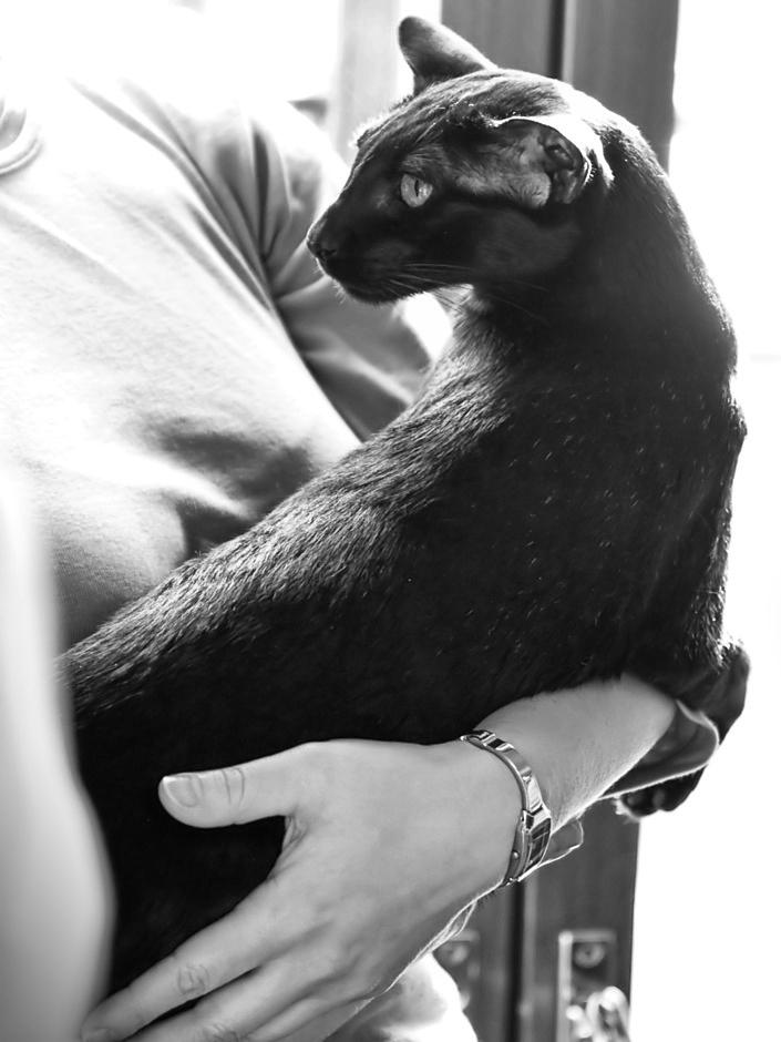 EP,EC Desmodus Black Ferrari (Pete) [OSH n], photo 103095, 2008-09-13