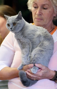 photo 103142 . Charlotte Lovely Panther (Lotta) [BRI a] . 2008-09-13