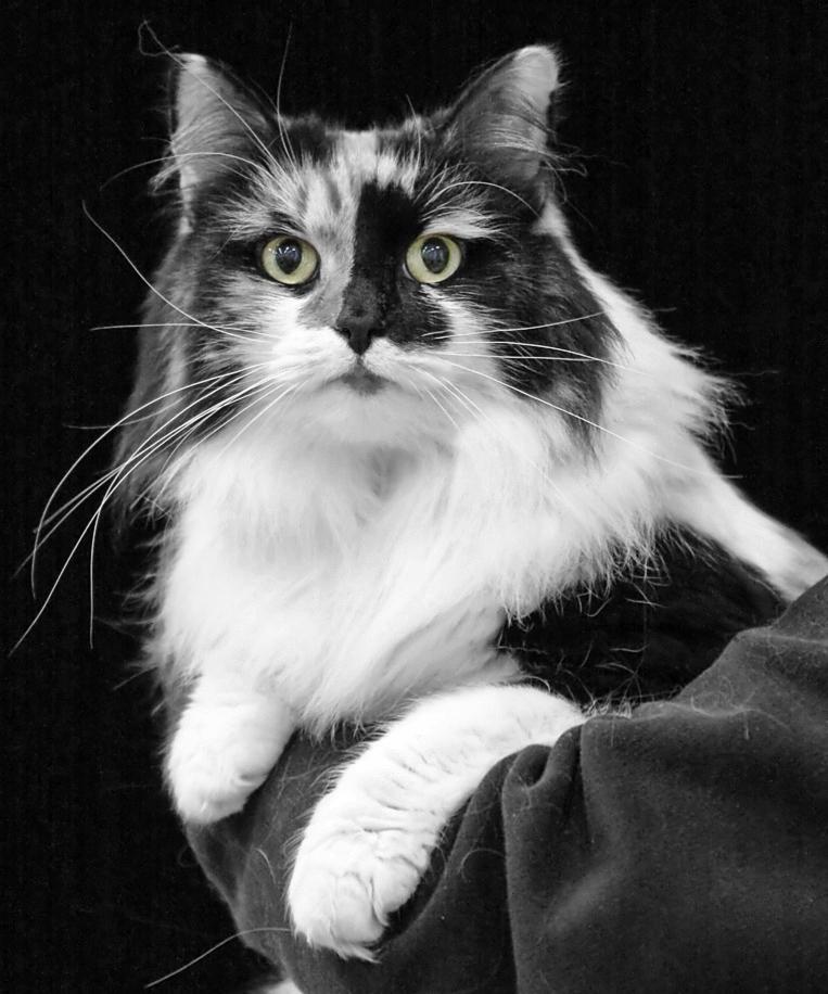 Raija [HCL] female, photo 104198, 2008-09-14
