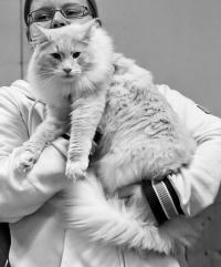 photo 105059 . Cougar's Anatol Gogol (Wallu) [NFO ds 09 24] . 2008-09-20