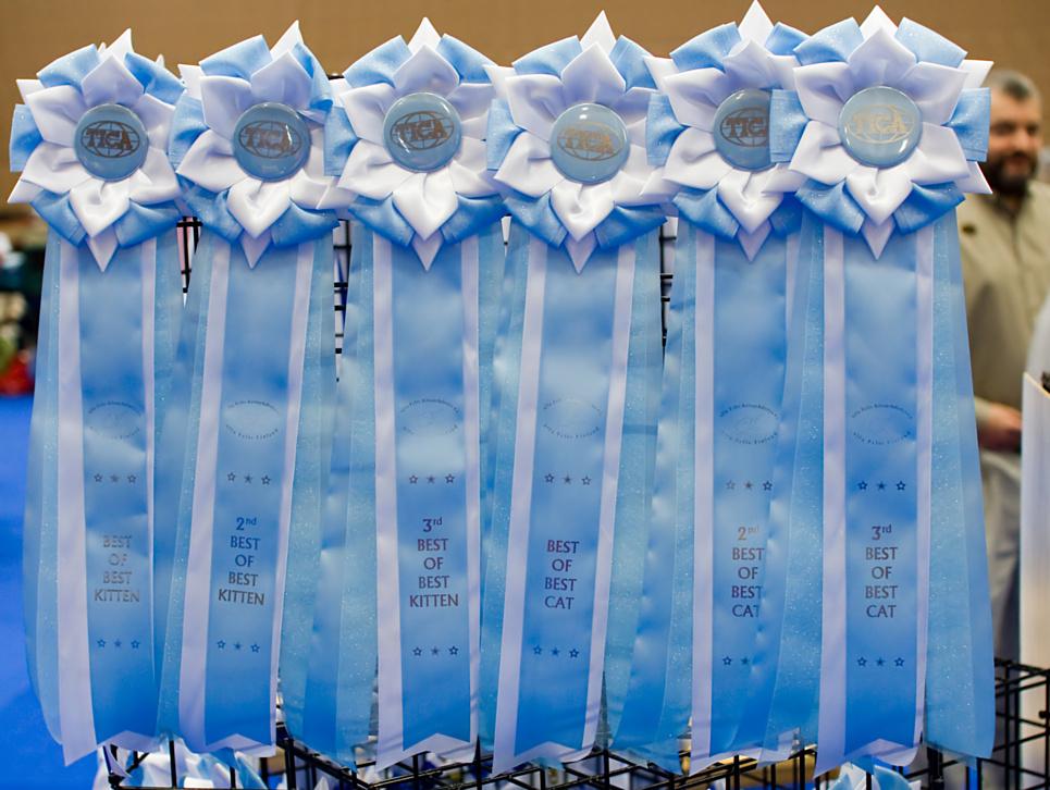 korkealaatuisia TICA-ruusukkeita, kuva 106003, 27.9.2008