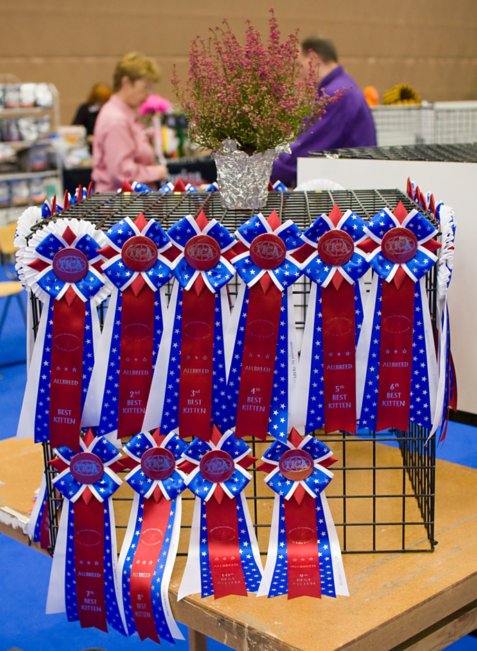 high quality TICA rosettes, photo 106005, 2008-09-27