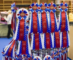 photo 106009 . high quality TICA rosettes . 2008-09-27
