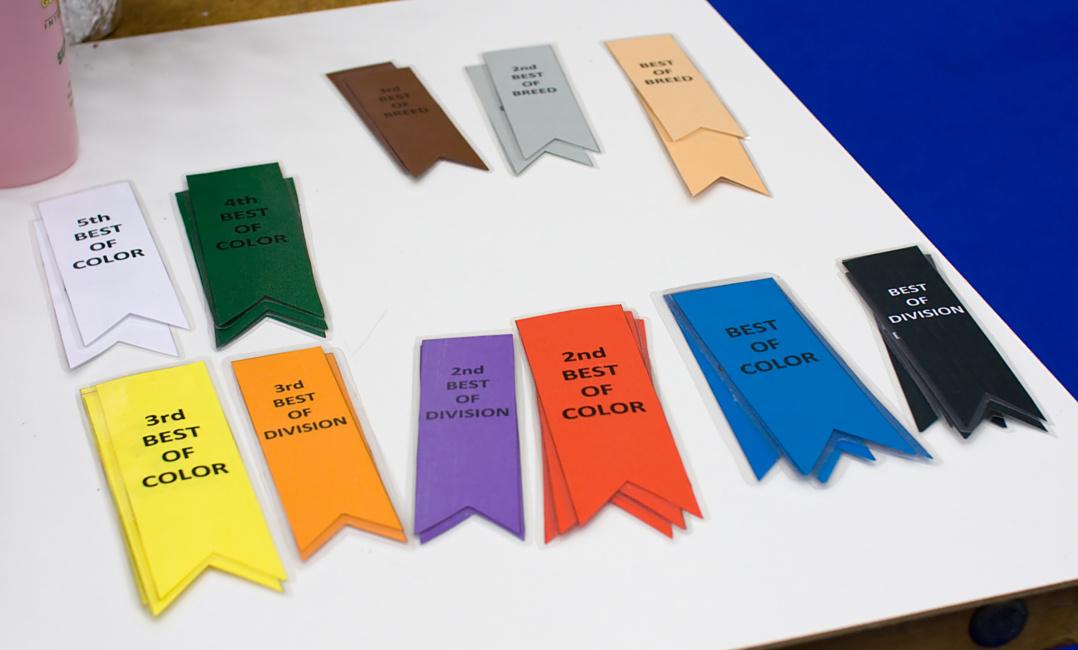 TICA ribbons, photo 106013, 2008-09-27
