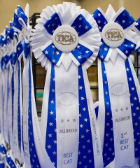 photo 106015 . high quality TICA rosettes . 2008-09-27