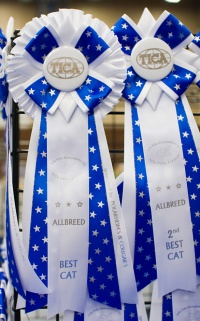 photo 106016 . high quality TICA rosettes . 2008-09-27